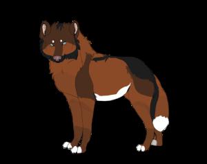 aliwolf12's Profile Picture