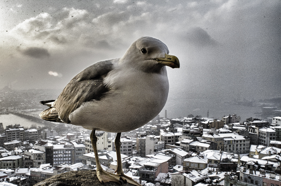 Seagull under snow storm by TanBekdemir