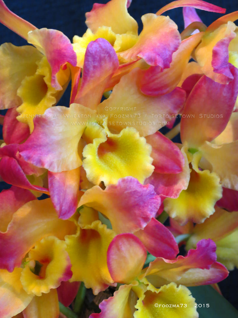 Orchid Show 2015 no.18 by Foozma73