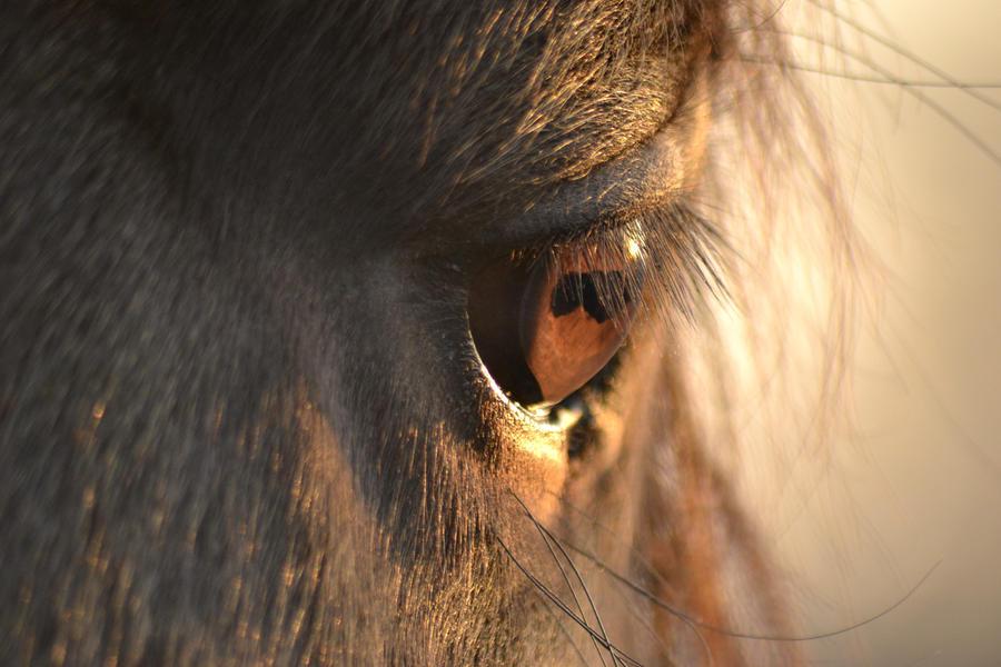 sun eye by emozya