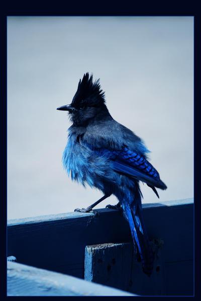 Volim plavo - Page 5 Oh__so__blue_____by_hugznstuff