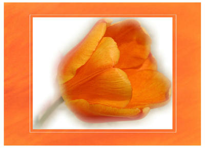 Peaches and Cream by hugznstuff