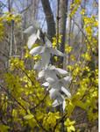 Blooming Gray