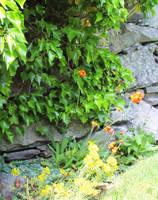 My Backyard Garden 5