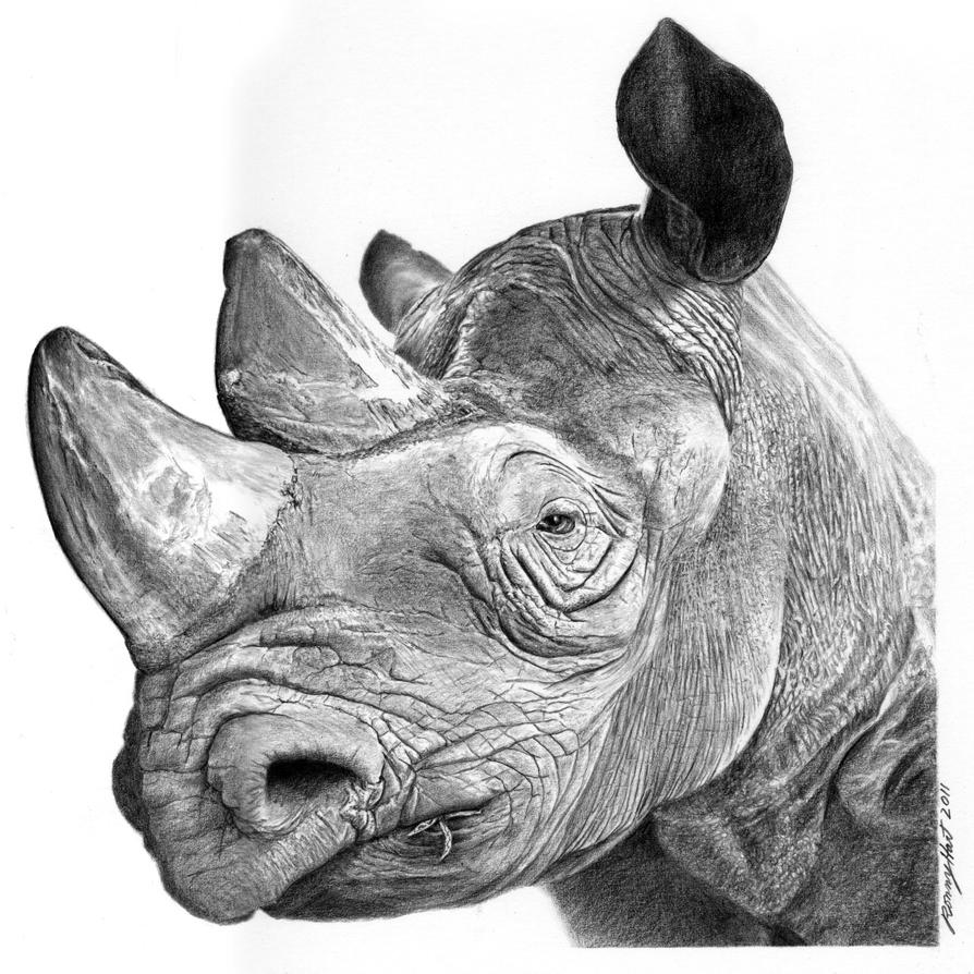 Mzima the rhino by hartr on DeviantArt