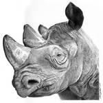 Mzima the rhino