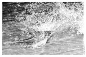 Gator Splash by hartr