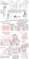 anatomy pt3