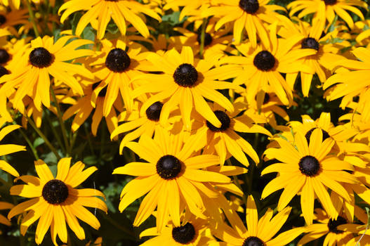 Yellow...and more yellow