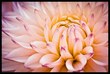 Land sea anenome edit by natsyk by snoogaloo