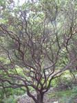 047 . tangled vines