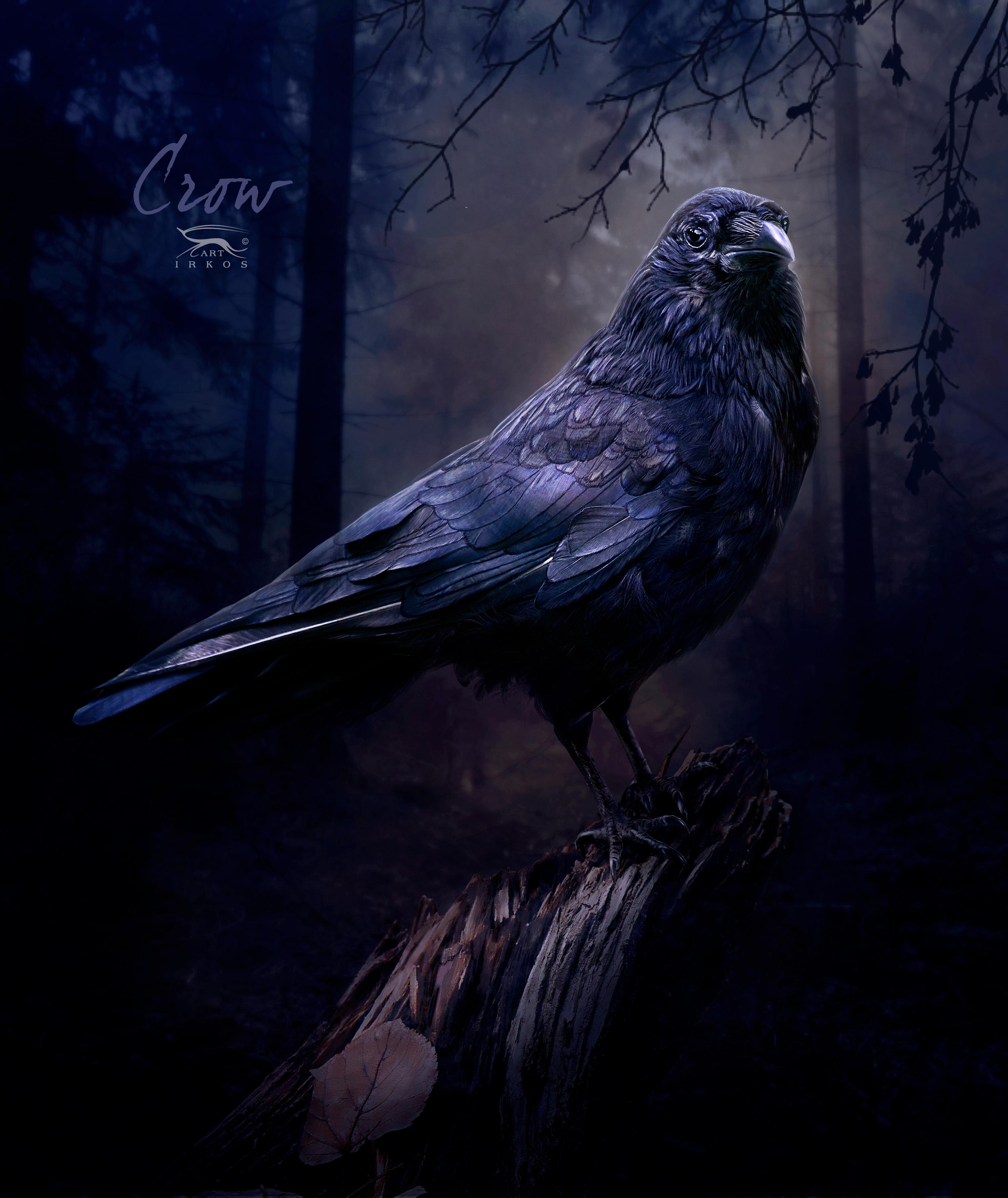 Crow by IrKos on DeviantArt
