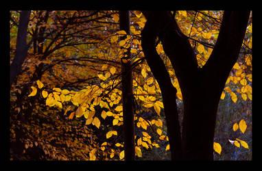 autumn again 2 by TearsOfTheNight