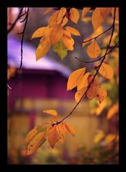 Autumn by TearsOfTheNight