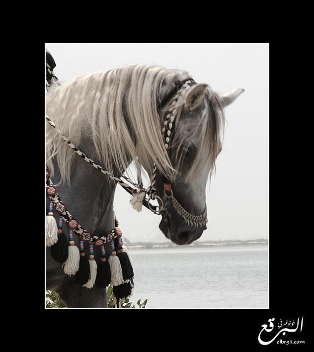 .. Ibn 3doon .. by elbrg3