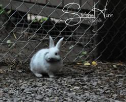 Mr Rabbit by Seramose