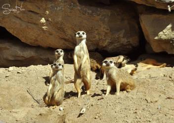 Family Watch by Seramose