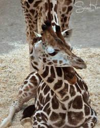 Cuddling by Seramose