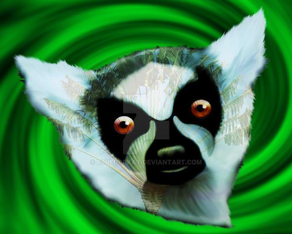 Lemur Mesmerizing Eyes by Bluedarkat