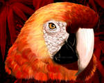 Red Macaw Parrot Portrait
