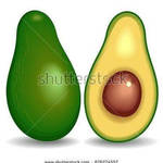 Avocado  Vector  BluedarkArtCopyright
