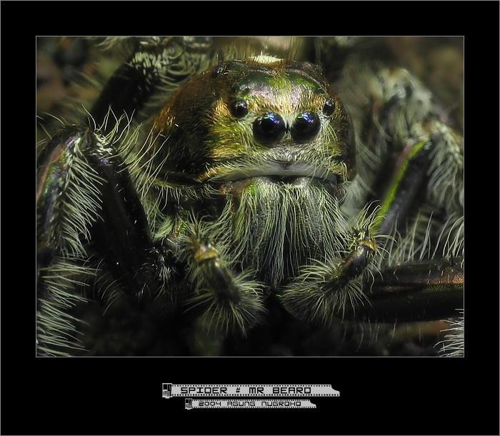 Spider :: Mr Beard by patul