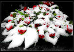 Funeral Roses by ZSudeta