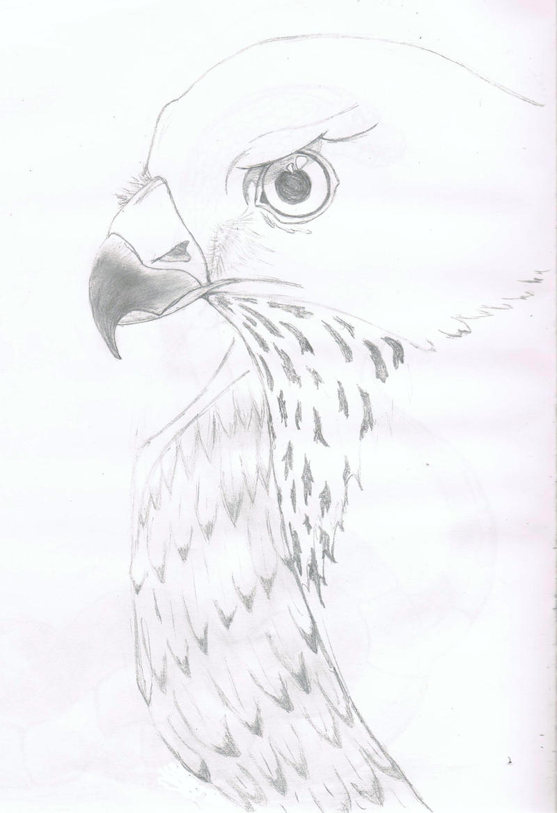 sparrow hawk drawing by realvisioon sparrow hawk drawing by realvisioon