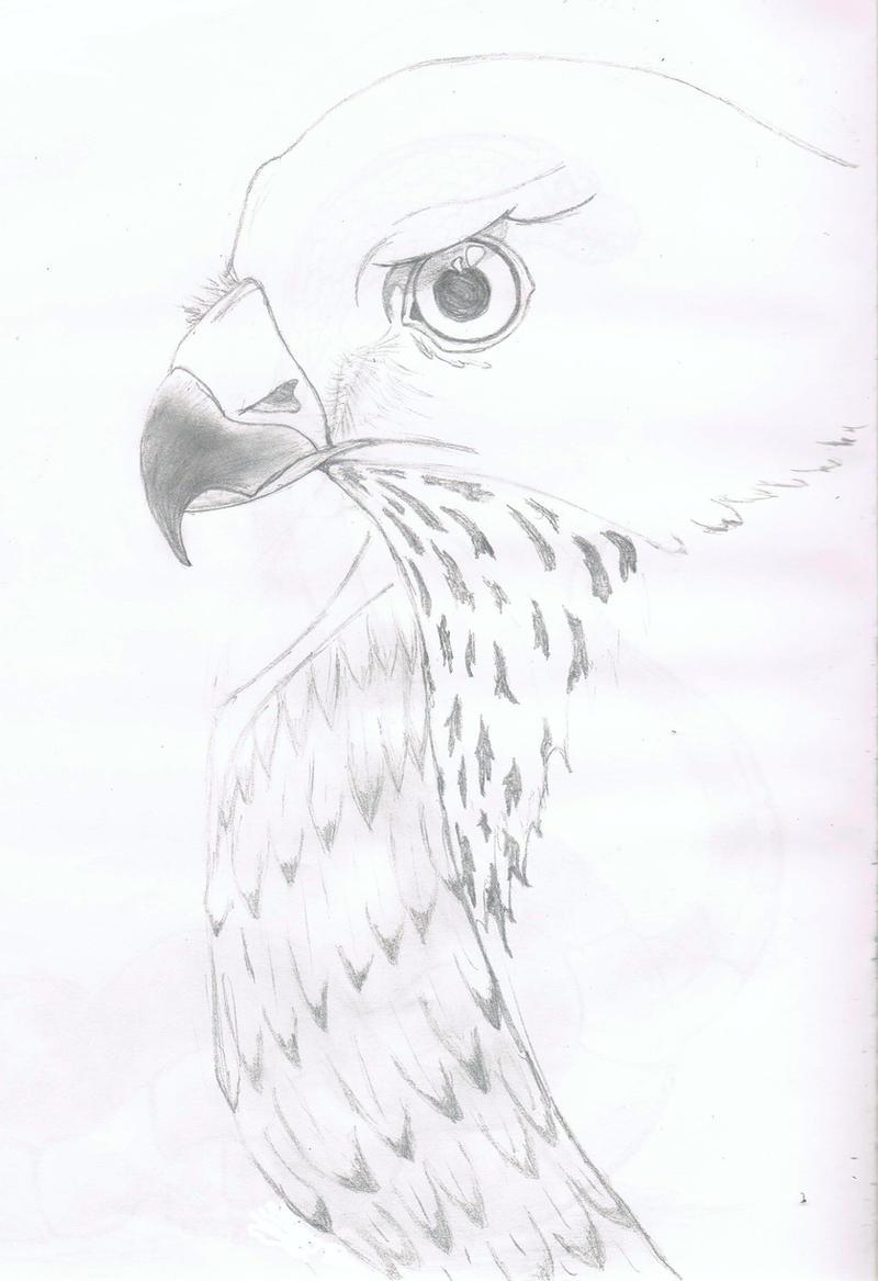 how to draw a cartoon sparrow