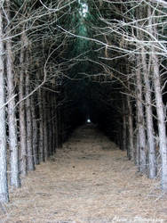 Running towards the light. by FrostyMorningBliss