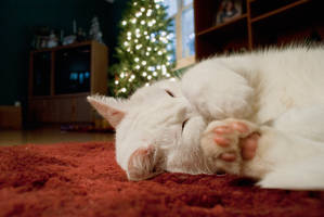 My Christmas Cat. by FrostyMorningBliss