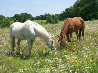 Horse stock 32 by earthtones-photos