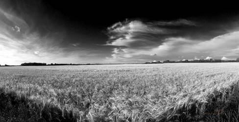 The Wheat Harvest Ready by Sybaristail