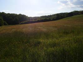 field by marlene-stock