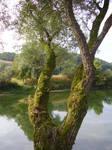 tree river 2