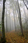 forest myst