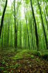 green forest stock