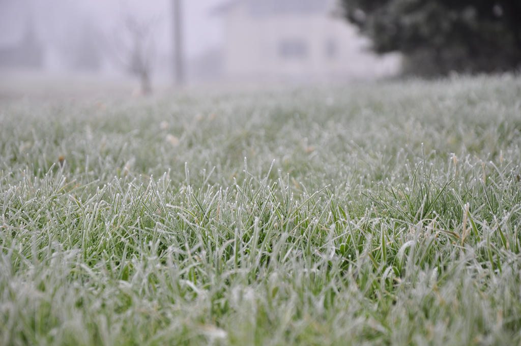 frozen grass stock by marlene-stock