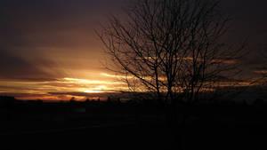 fall sunset tree