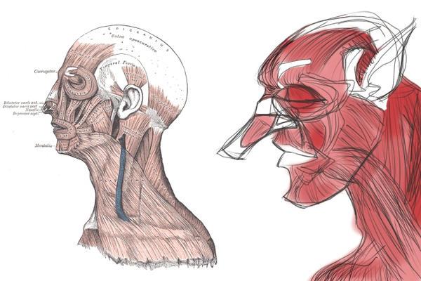Human Anatomy - Head Profile Muscles by luis-GAH