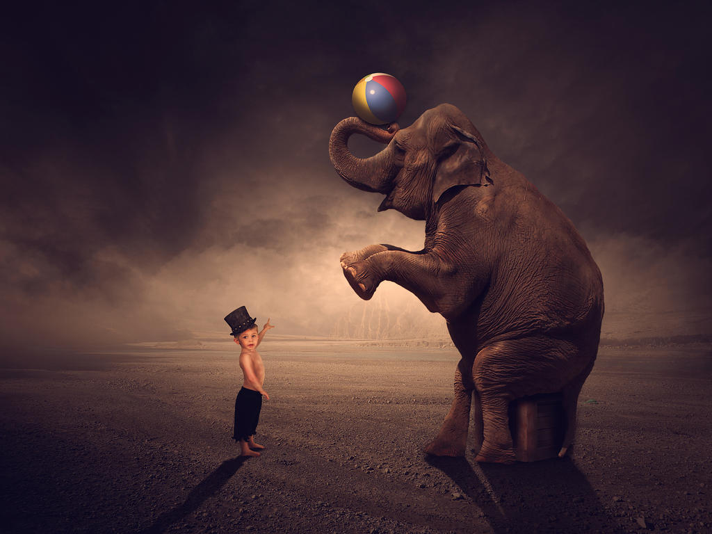 Elephant And Boy!