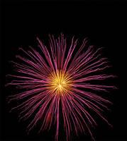 Daisy firework by alischan