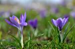 Spring 01 by ilse-de-goede