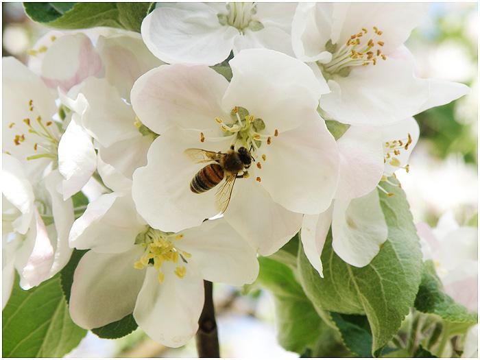 Spring 9 by kisago