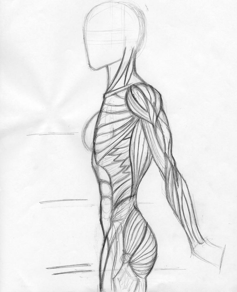 Anatomy for elf profile by DestroyedArt1101 on DeviantArt