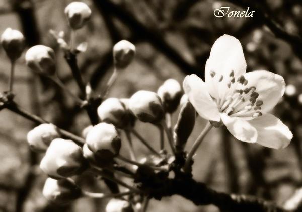 Flowers! by EllyElla