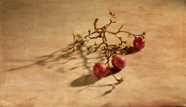 autumn still life by daniBlast