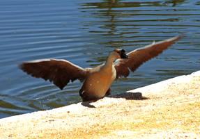 big goose by vannickArtz