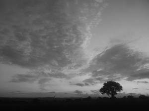 Tree At Sunset B and W