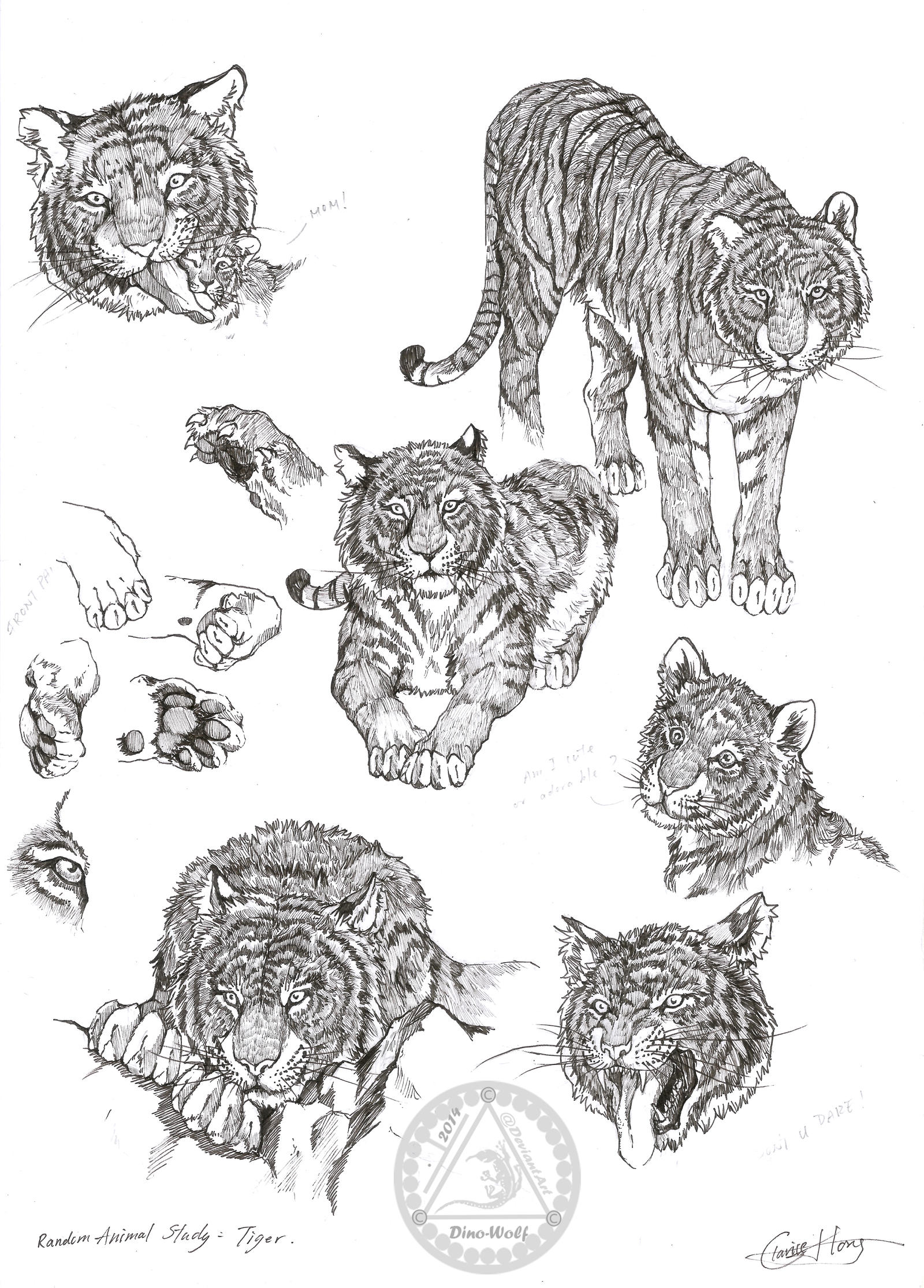 a study of the tiger The purgative tone and stream-of-consciousness technique virginia woolf uses in her short essay, helps her take a deeper look into an insignificant event such as the.